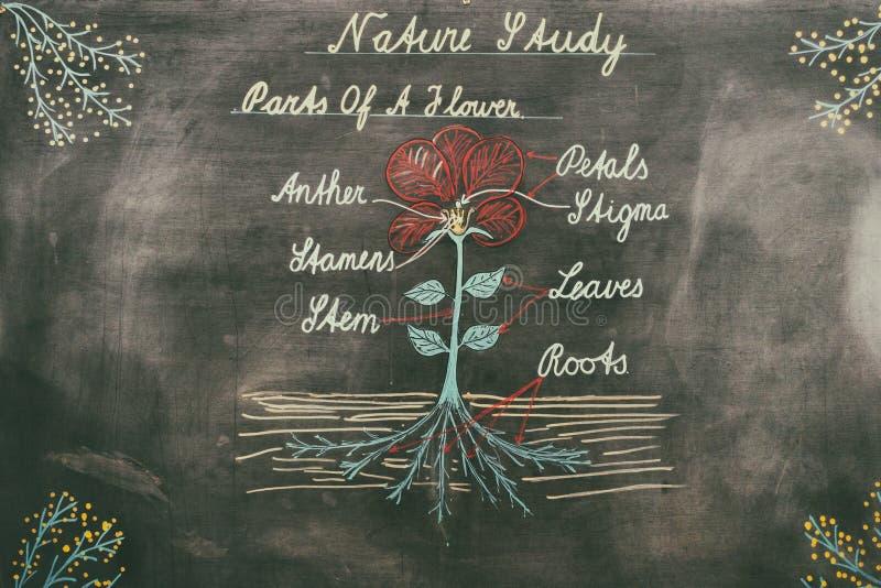 Diagram van aard op schoolbord stock illustratie