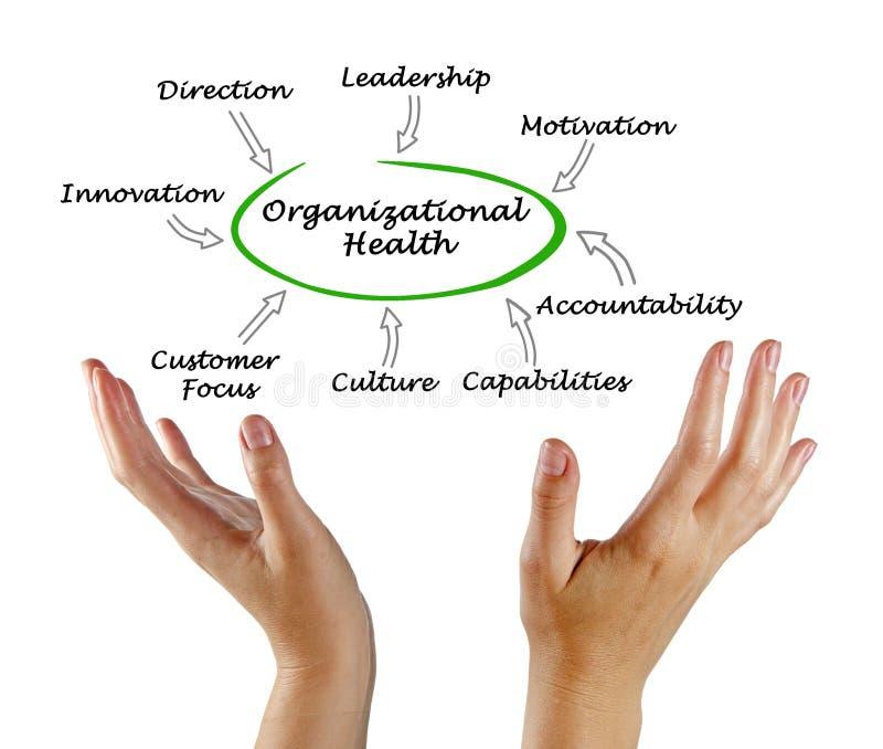 Diagrama da saúde de organização foto de stock royalty free