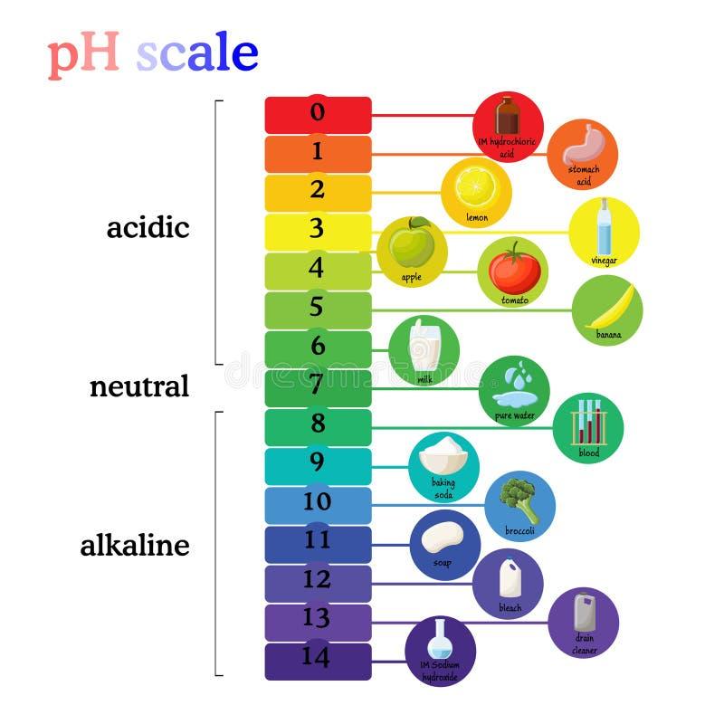 Diagrama de la escala del pH con la correspondencia valores ácidos o alcalinos para las sustancias comunes, comida, sustancias qu ilustración del vector