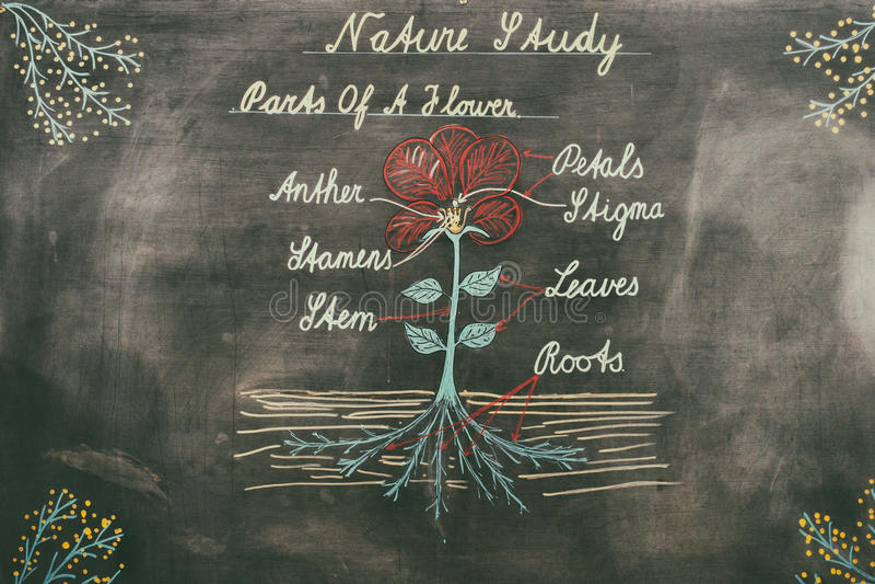Diagrama de la naturaleza en el tablero de tiza stock de ilustración