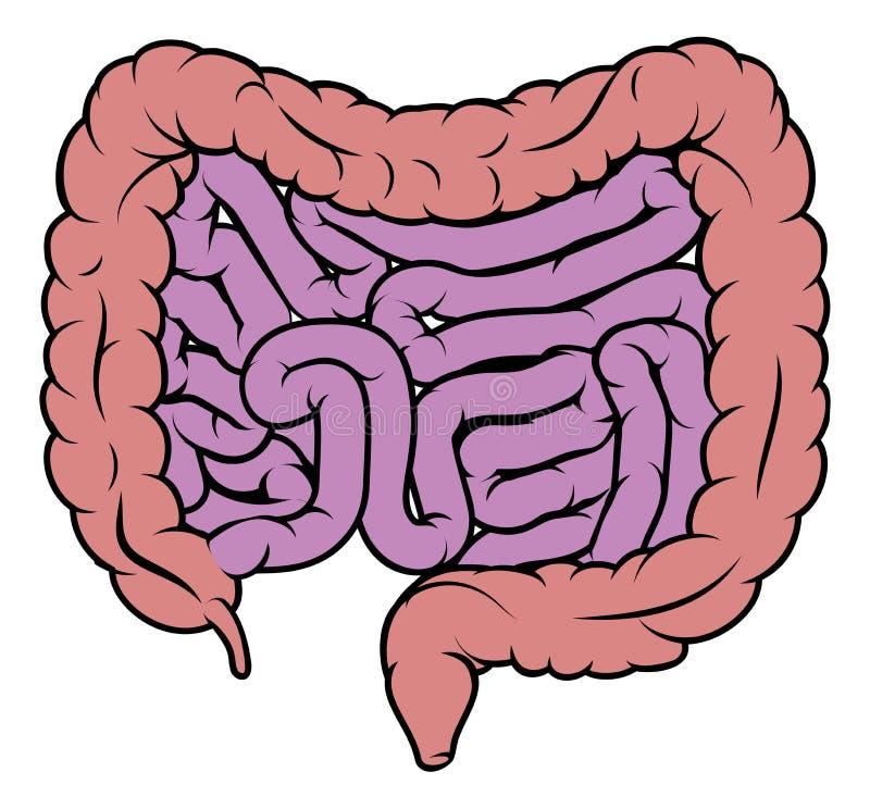 Diagrama de sistema digestivo do intestino do intestino ilustração royalty free