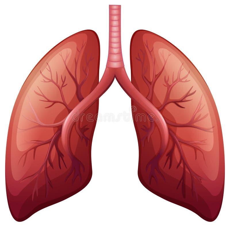Diagrama del cáncer de pulmón detalladamente ilustración del vector