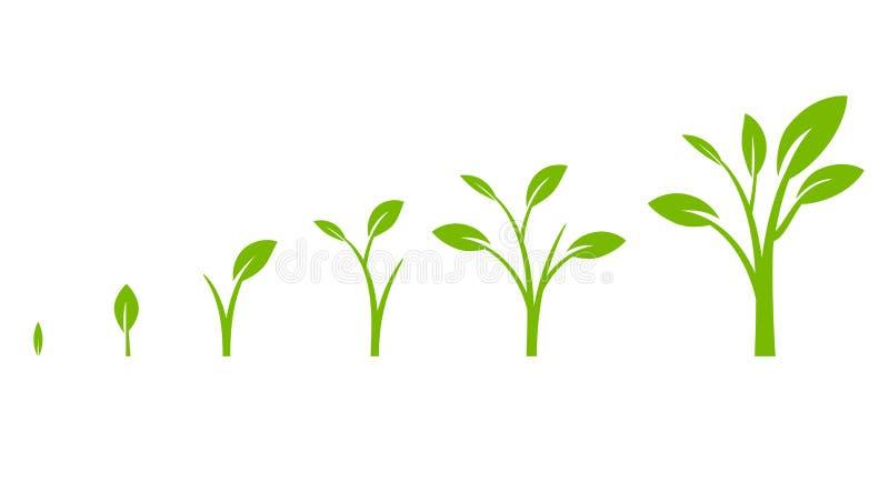 Diagrama del crecimiento del árbol con la hoja verde ilustración del vector