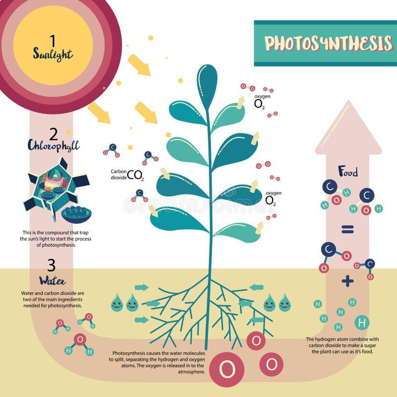 Diagrama do processo da fotossíntese ilustração royalty free