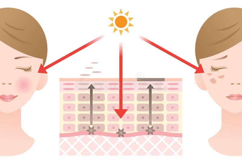 Diagrama do retorno regular da célula epitelial e do retorno lento da célula epitelial ilustração do vetor