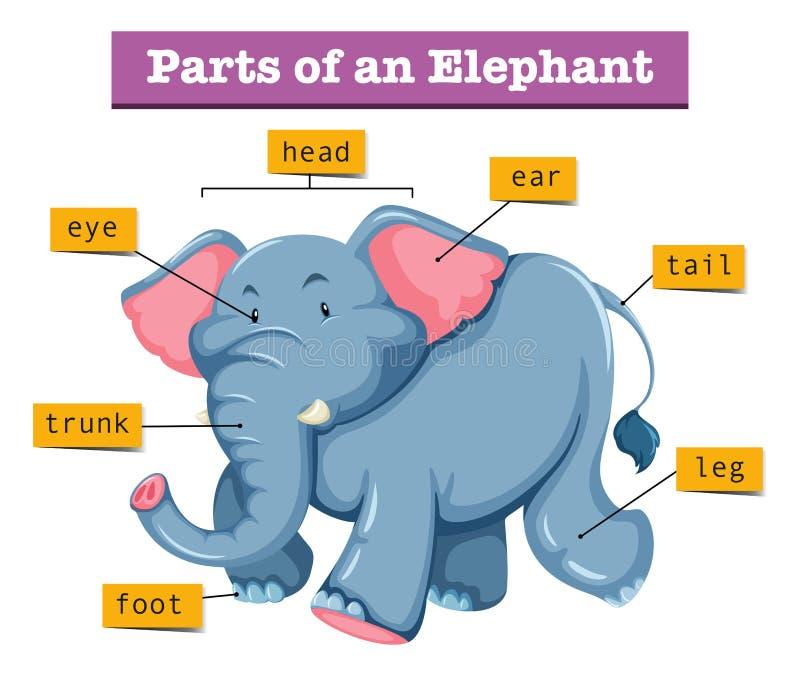 Diagrama que mostra partes do elefante ilustração stock
