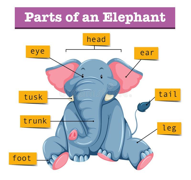 Diagrama que mostra partes do elefante ilustração do vetor
