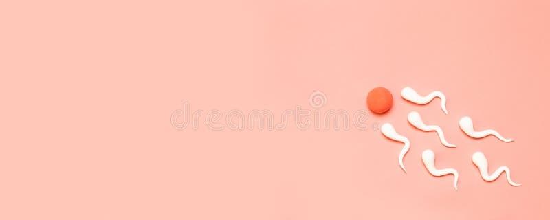 Diagramet av mänsklig sperma och det mänskliga ägget fotografering för bildbyråer