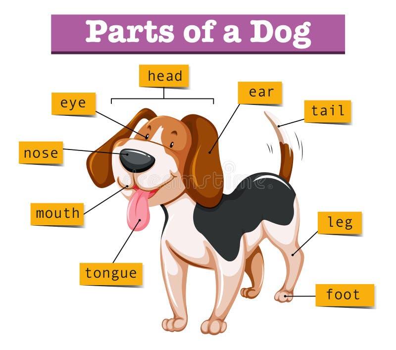 Diagramm, das Teile des Hundes zeigt lizenzfreie abbildung