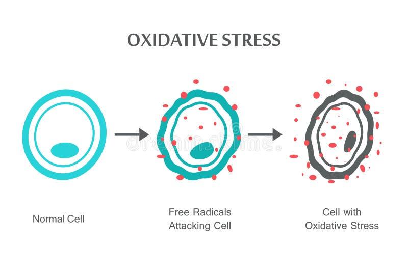 Diagramm des oxidativen Stresses lizenzfreie abbildung