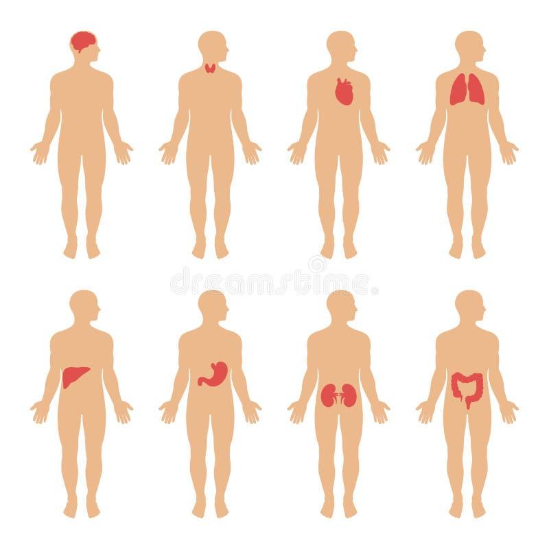 Diagramma che mostra l'illustrazione dei sistemi del corpo umano illustrazione di stock