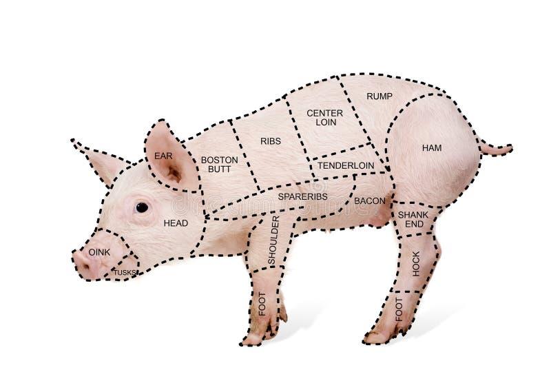 Diagramma del maiale del macellaio fotografia stock
