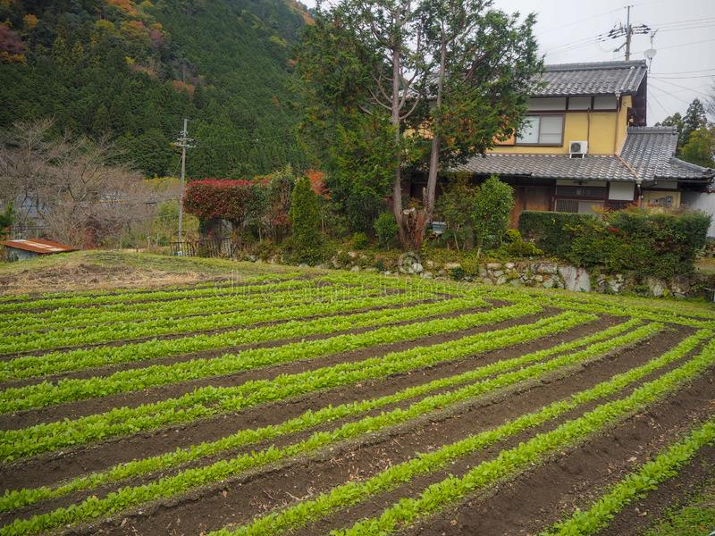 Diagramma di verdure accanto alla casa nella zona rurale di Kyoto per fondo immagini stock libere da diritti