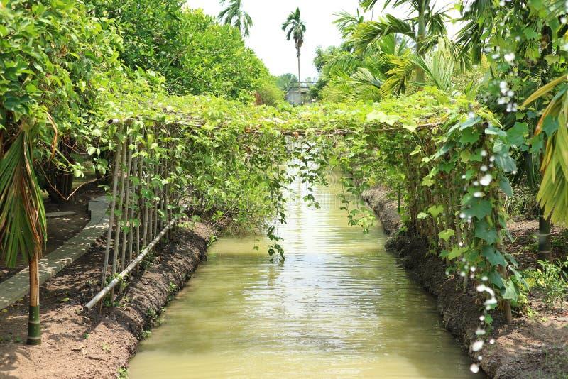 Diagramma di verdure del boschetto, giardino verde di agricoltura nella natura del fiume fotografia stock libera da diritti