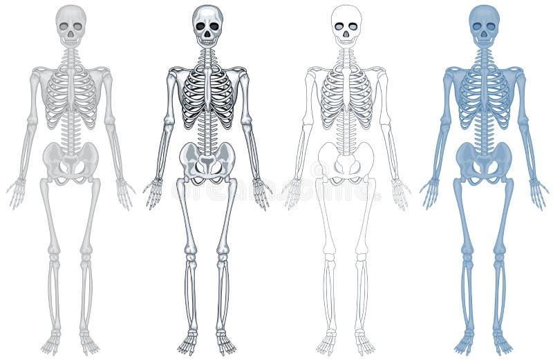 Diagramma differente dello scheletro umano illustrazione vettoriale