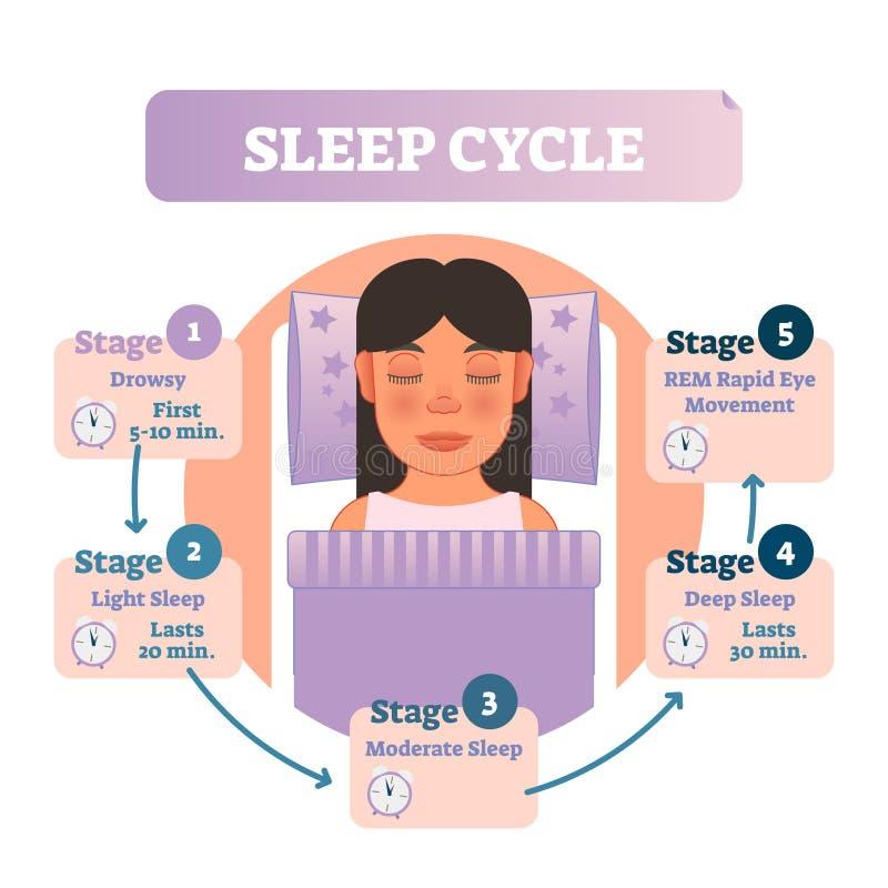 Diagramma umano sano dell'illustrazione di vettore del ciclo di sonno con la femmina a letto e le fasi di sonno Schema infographi illustrazione vettoriale