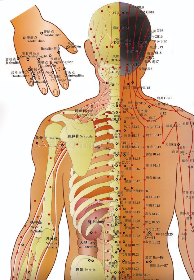 Diagramme d'acuponcture - médecine parallèle   illustration stock