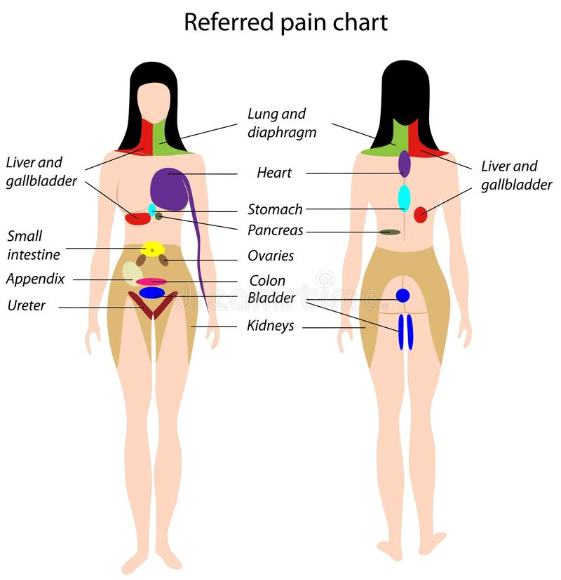 Diagramme référé de douleur illustration stock