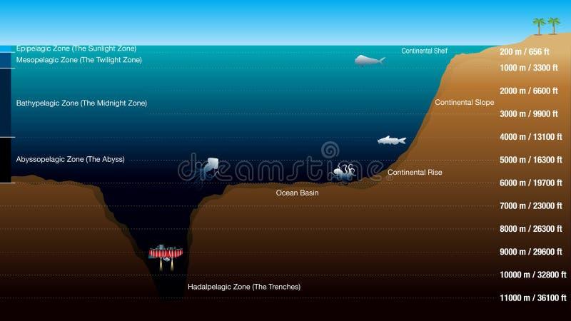 Diagrammet visar de 5 zonerna enligt djupet av havet, med skalan i meter och fot Diagrammet inkluderar konturer av royaltyfri illustrationer