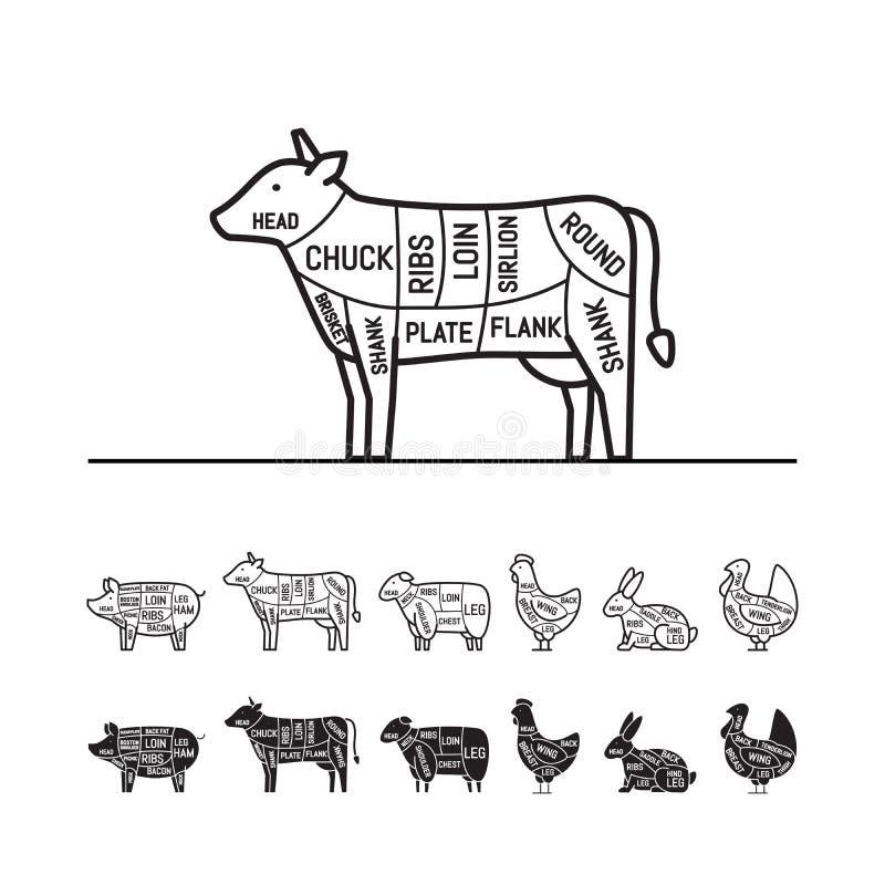 beef  cow cuts butcher vector diagram stock vector