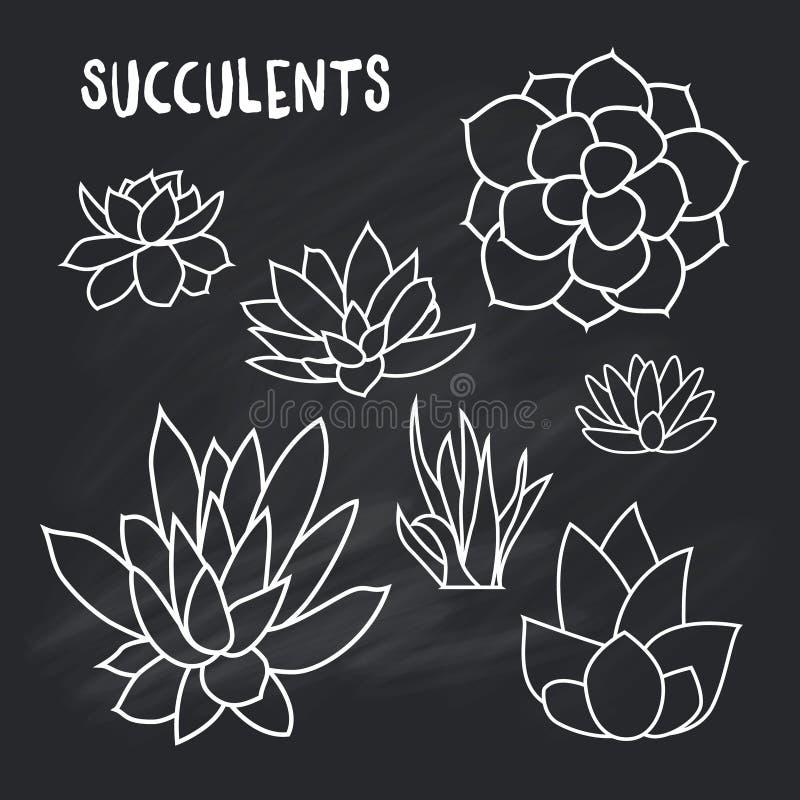 Diagramuppsättning av suckulenter på kritabrädet för design av kort, inbjudningar royaltyfri illustrationer