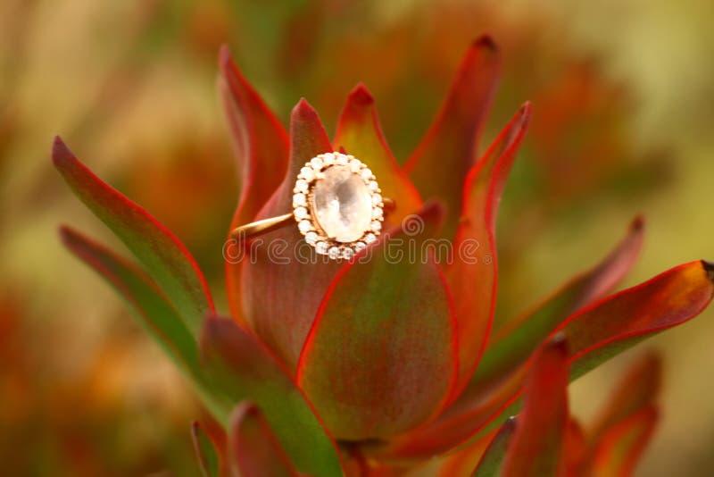 Diamante del Protea foto de archivo