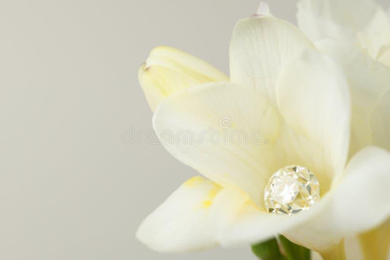 Diamante in fiore bianco immagine stock libera da diritti