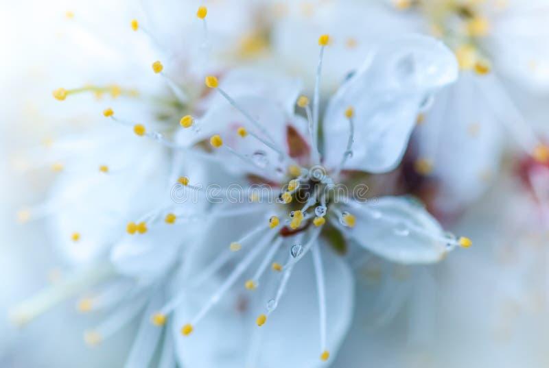 Diamanti della pioggia fotografie stock