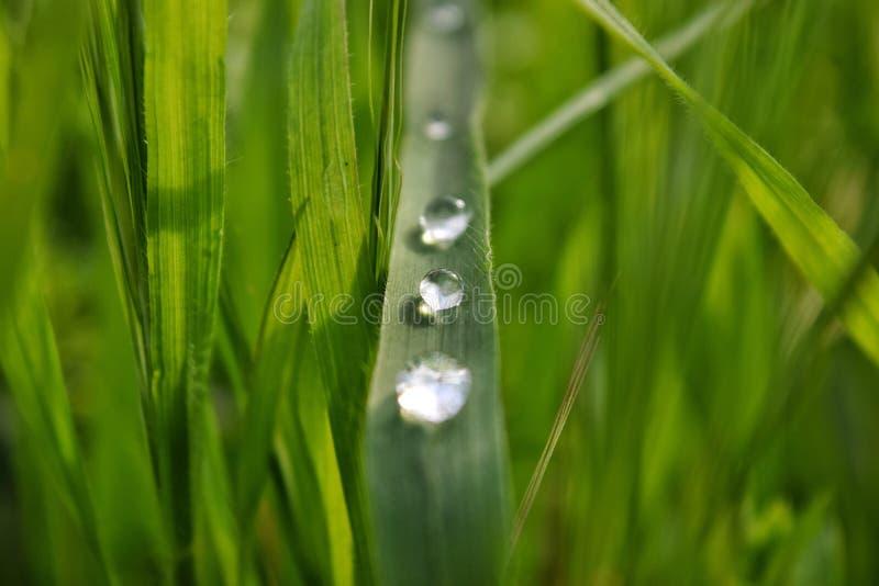 Diamants de goutte de pluie photographie stock