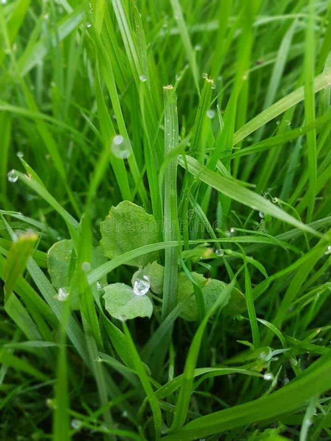 Diamenty w zieleni obrazy stock