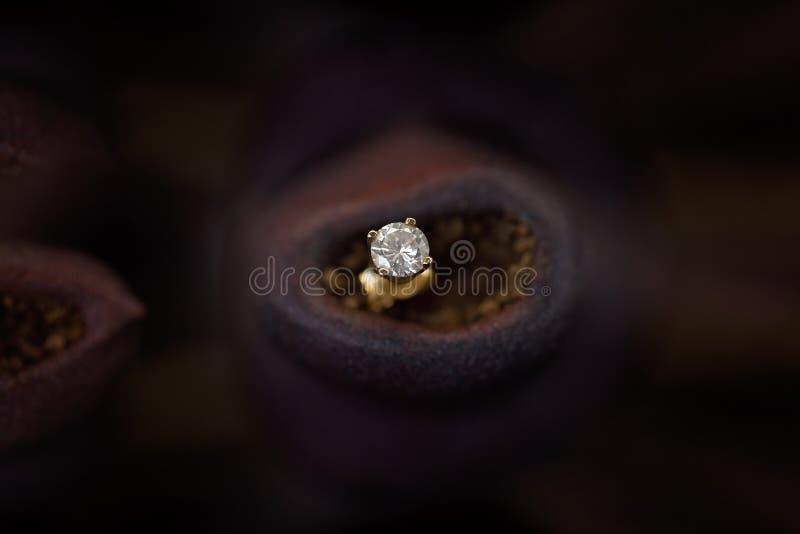 Diamond Earring In un écrou Shell de gomme photos stock