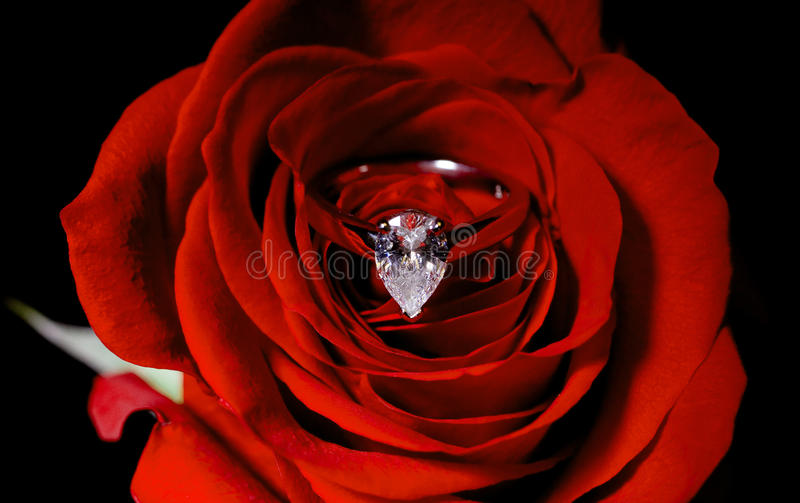 Diamond engagement ring inside a red rose royalty free stock images