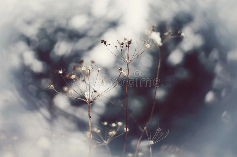 Diamond Flower photo libre de droits
