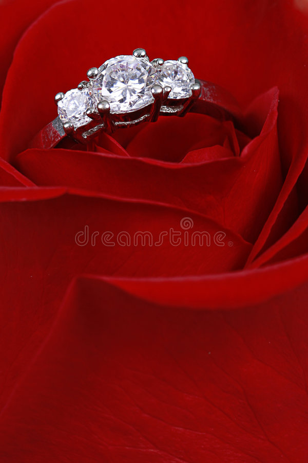 Diamond ring in red rose stock image