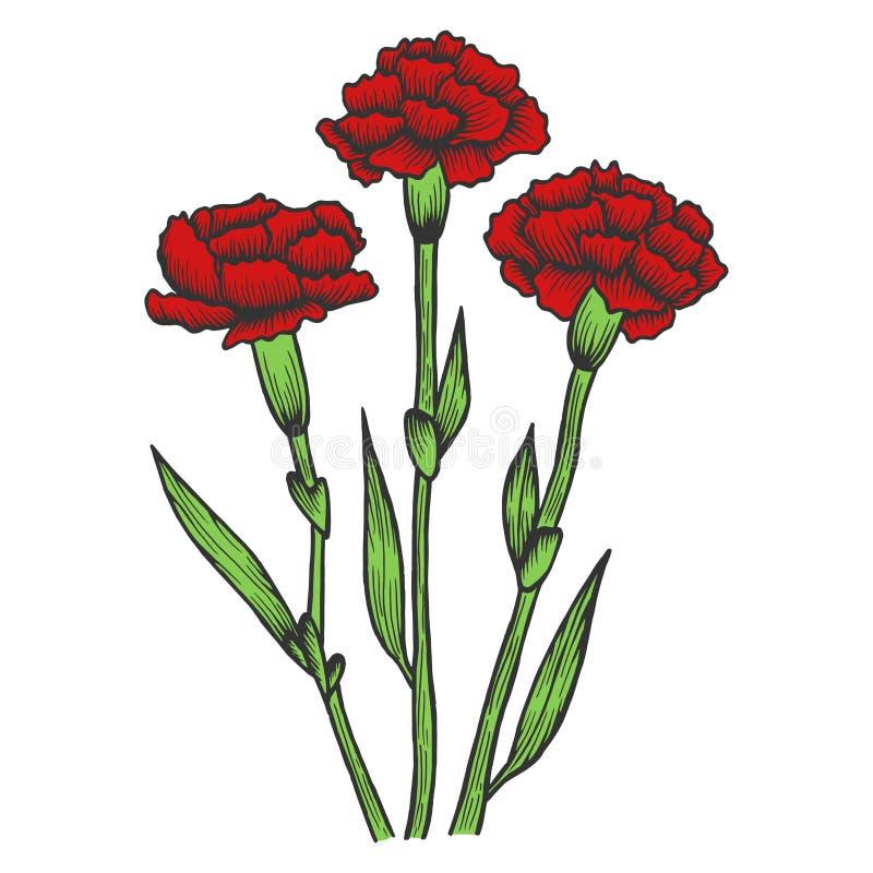 Dianthus go?dzika kwiat?w nakre?lenia rytownictwa wektor ilustracja wektor