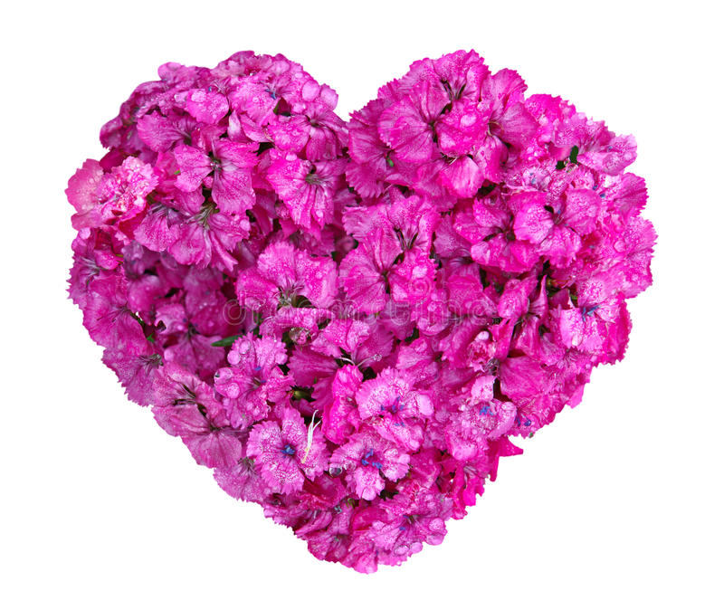 Dianthus Heart royalty free stock photos
