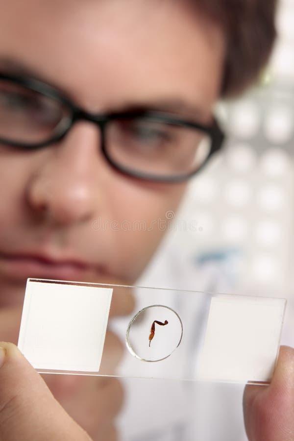 Diapositiva del microscopio fotos de archivo