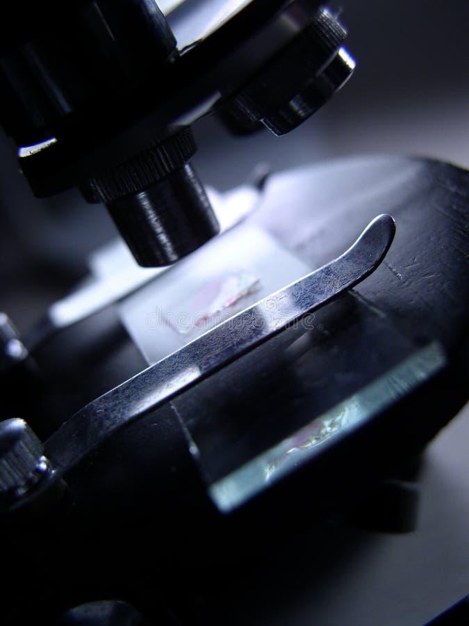 Diapositiva Del Microscopio Bajo Examinación Fotografía de archivo libre de regalías