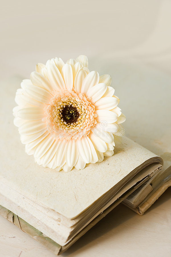 Diary with opened sheets and biege flower stock photos