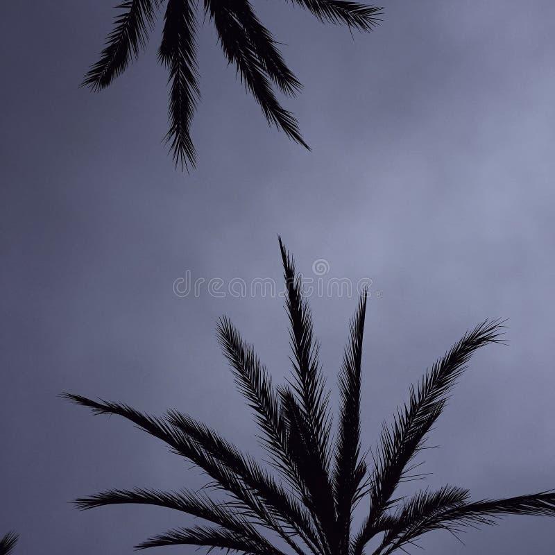 Dias chuvosos em Los Angeles imagem de stock