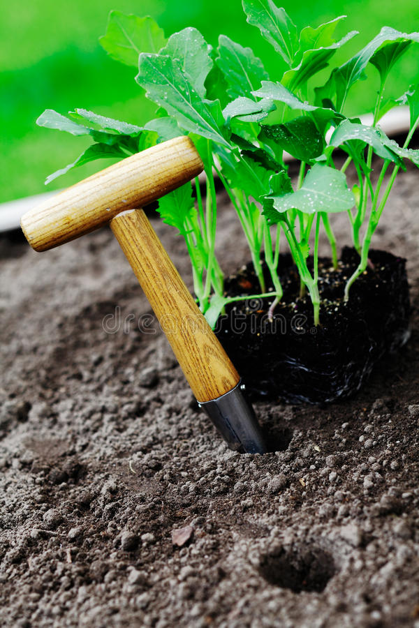 Download Dibber stock image. Image of cute, hole, green, grow - 24890839