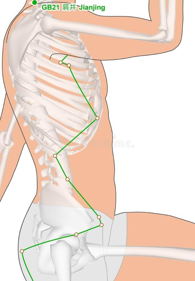 Dibujando con el esqueleto, punto GB21 Jianjing, Gall Bla de la acupuntura stock de ilustración