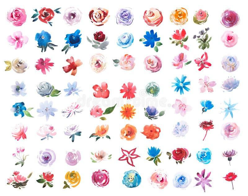 Dibujo acuarela de verano prado flores frescas acuarela pintura fotografía de archivo libre de regalías
