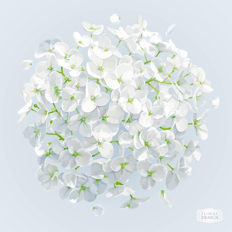 Dibujo blanco del vector de la flor de la hortensia ilustración del vector