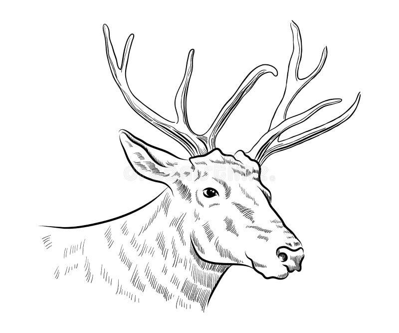 Dibujo blanco y negro monocromático principal de los gráficos de vector del bosquejo de los ciervos del macho ilustración del vector