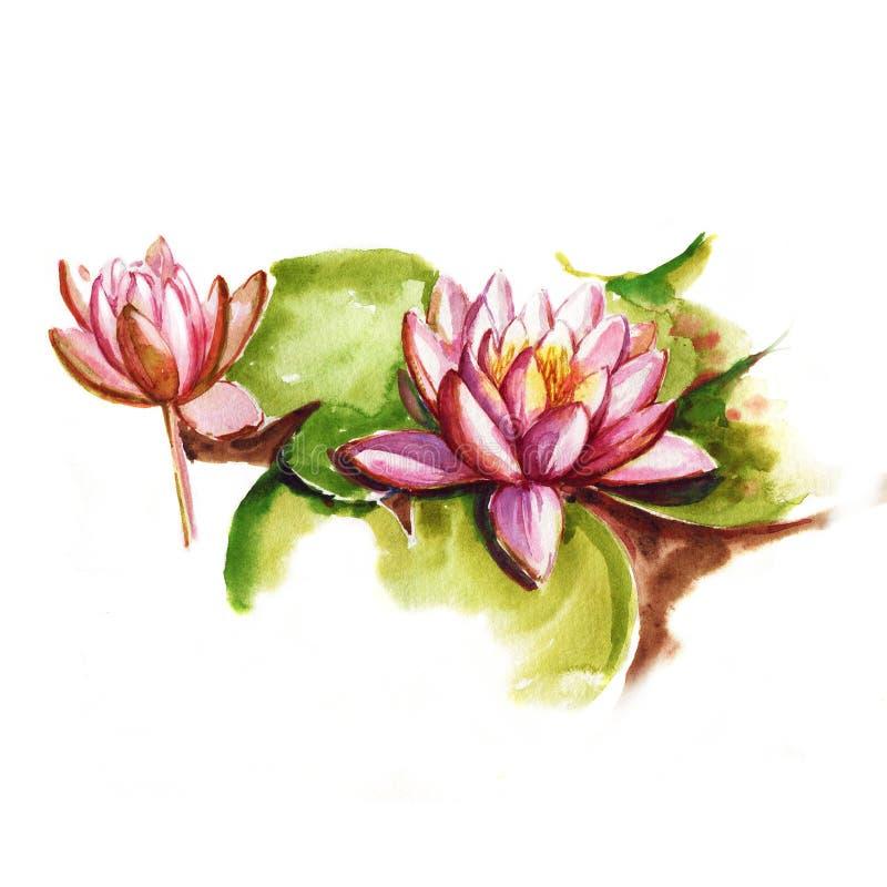 Dibujo botánico aislado en el fondo blanco Loto rosado con las hojas verdes libre illustration