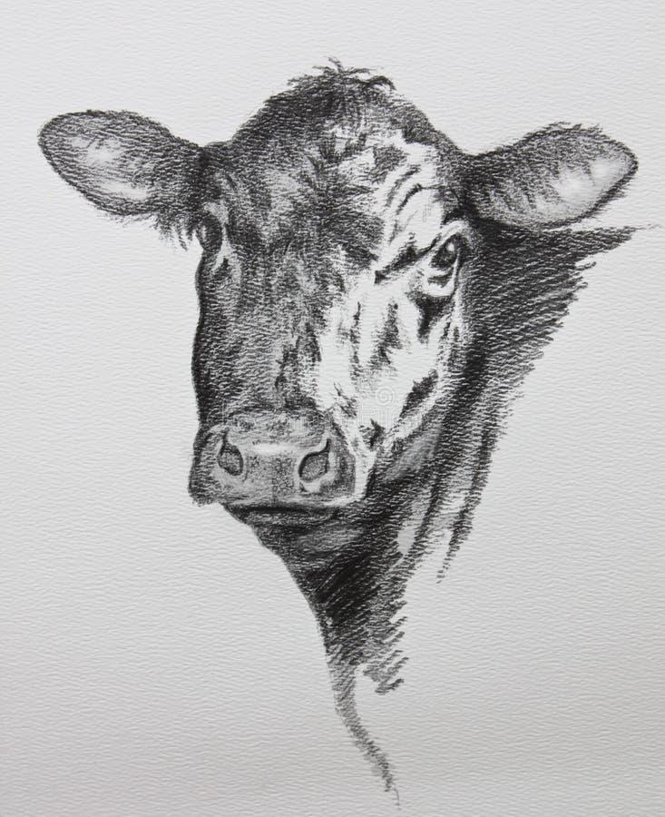 Dibujo de lápiz de la vaca ilustración del vector