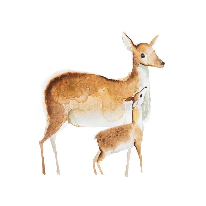 Dibujo de la acuarela de ciervos de la madre y de un cervatillo ilustración del vector