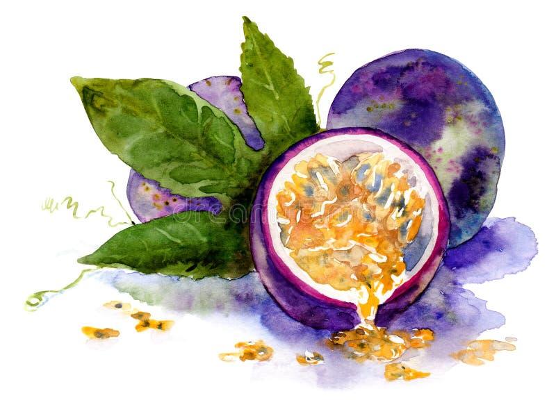 dibujo de la acuarela de la fruta Fruta de la pasión madura stock de ilustración