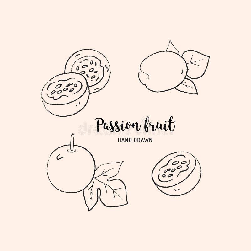 Dibujo de la fruta de la pasión, rebanada de la pasión y fruta jugosa entera Bosquejo de la fruta de la pasión en el fondo blanco stock de ilustración